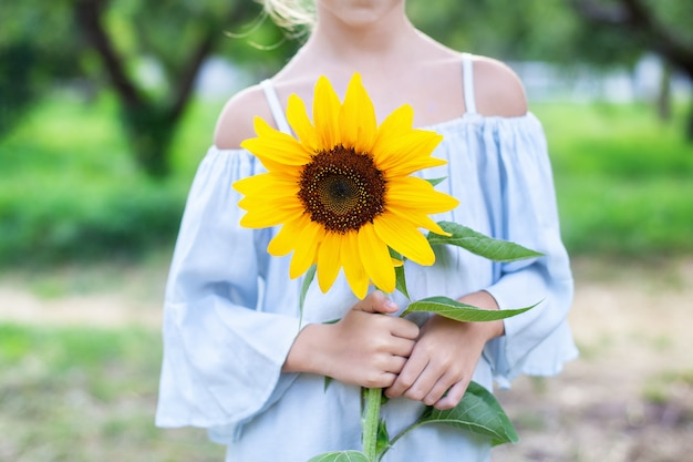 Sunflower in female hands. happy little girl with a beautiful sunflower in a summer park at sunset. harvesting. hands of a child with a flower.