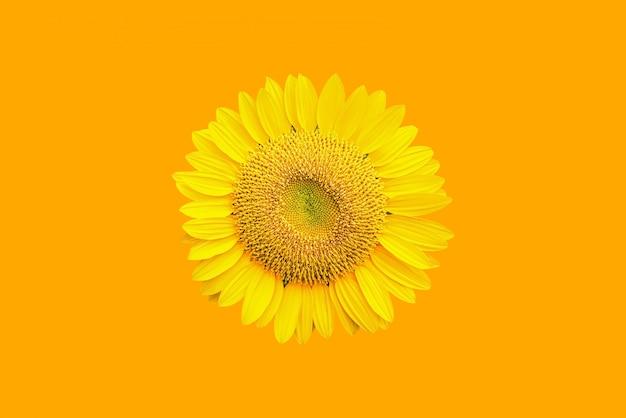 Sunflower field with beautiful