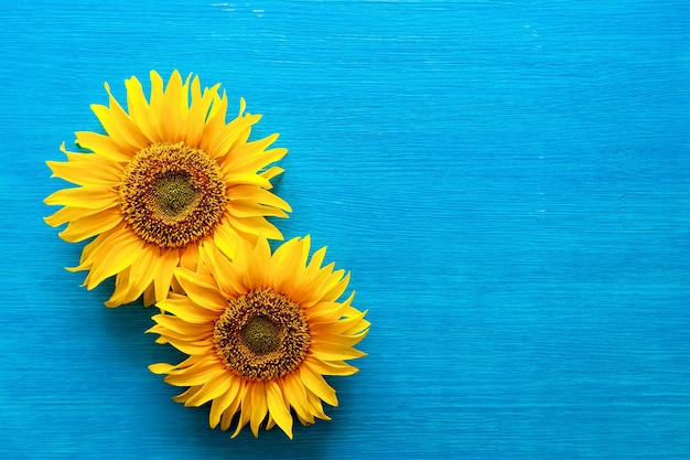Цветок подсолнечника и семена подсолнечника на деревянном синем фоне