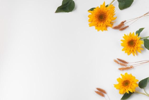 白い背景の上のひまわりの花と小穂。秋のカード。テキストの場所。秋のフレーム、フラットレイ、レイアウト