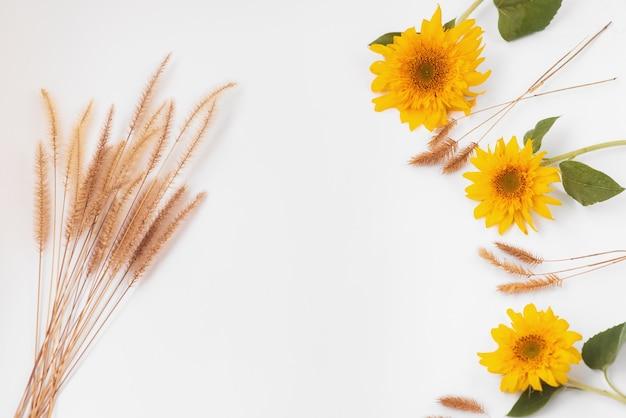 白い背景の上のひまわりの花と小穂。秋のカード。テキストの場所。秋のフレーム