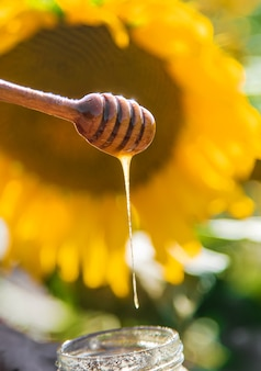 손에 해바라기 꽃 꿀입니다. 선택적 초점입니다.