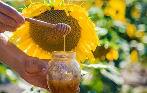 해바라기 꽃 꿀을 손에. 선택적 초점입니다.