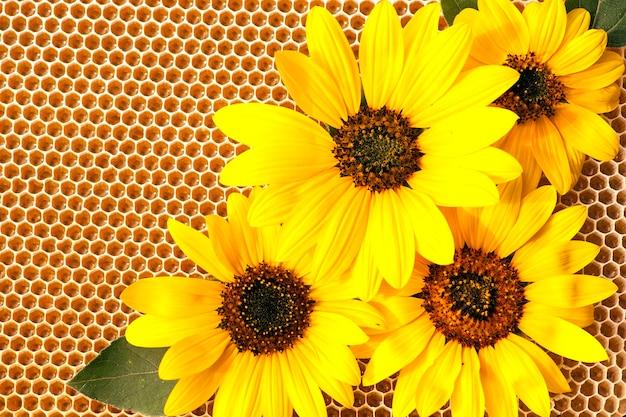 해바라기 꽃과 넓어짐에 해바라기 꿀.