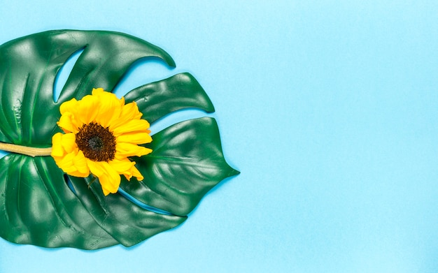 Sunflower and monstera leaf