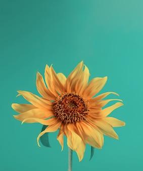 녹색 종이 배경에 해바라기 미니멀 한 꽃 배경