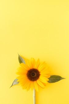 노란색 배경에 해바라기입니다. 큰 복사 공간이 있는 미니멀한 흑백 꽃 컨셉입니다. 아름 다운 자연 꽃입니다.
