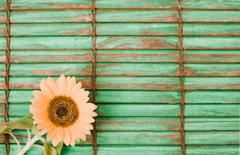 Sunflower on the corner of wooden striped backdrop