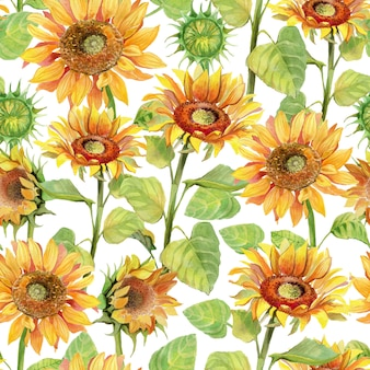 Sunflower seamless pattern watercolor.