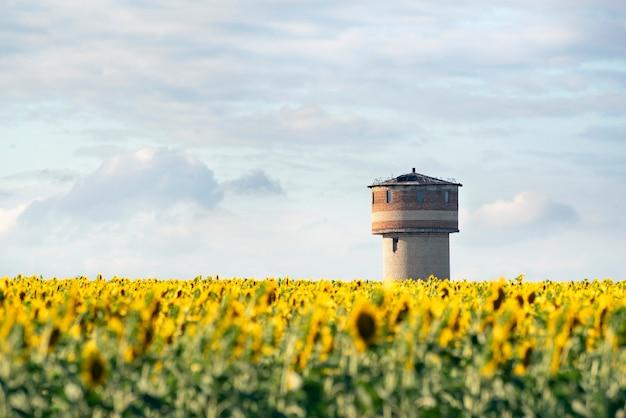 푸른 하늘과 급수 탑에 대 한 해바라기 밭
