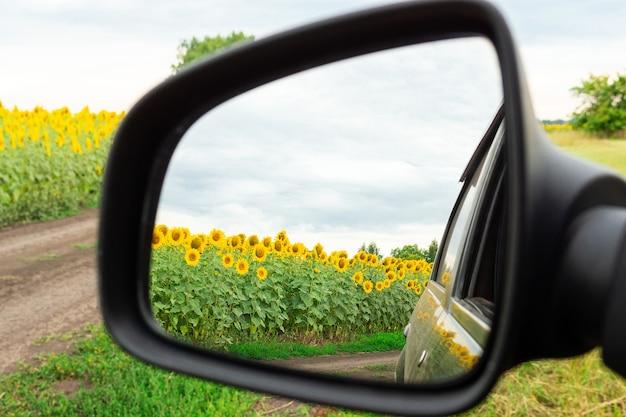 Sunflowers and machine
