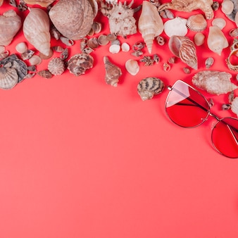 Sunglasses and different type of seashells on coral background