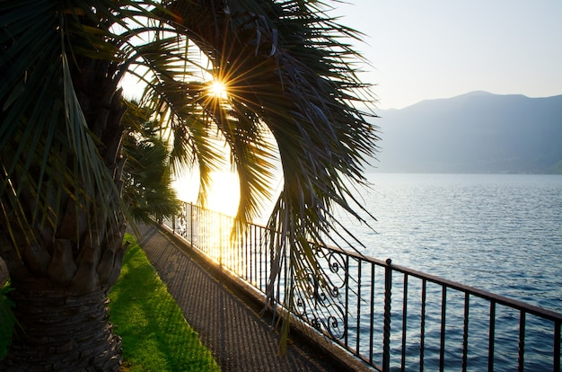 Sunlight covering the palm trees on the body of the lake