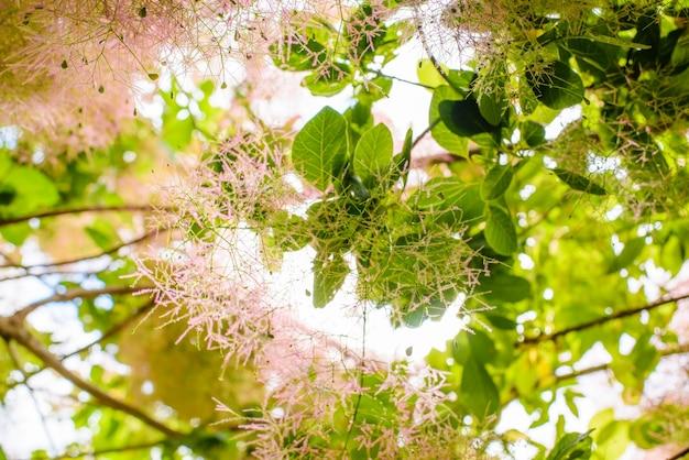 호주에서 햇빛 유칼립투스 나뭇잎과 꽃
