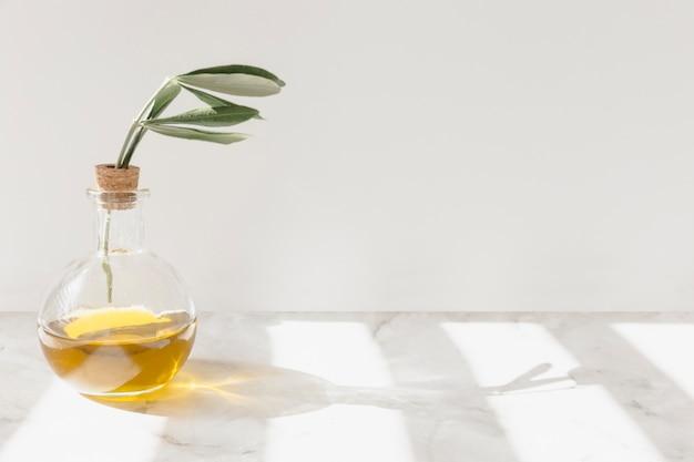 Luce solare che cade sul ramoscello dentro la bottiglia di vetro sul pavimento