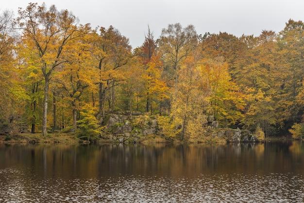 물에 의해 나무와가 숲에서 햇빛. 호수 주변의 하이킹 코스