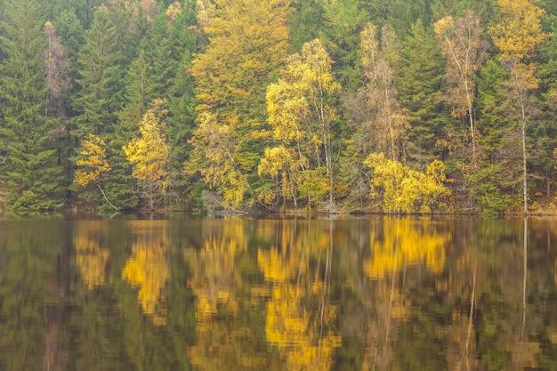 물에 의해 나무와가 숲에 햇빛