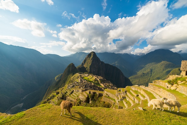 Sunlight on machu picchu, peru, with llamas in foreground