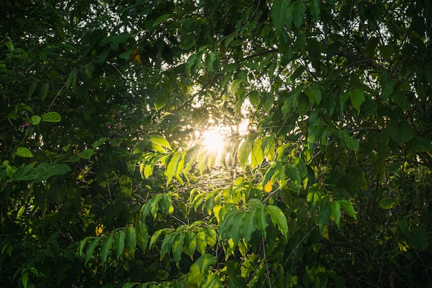 Солнечный свет проникает сквозь деревья в лесу вниз, открывая дыру, делая темноту яркой.