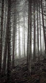 霧の森の携帯電話の壁紙を通して輝く日光