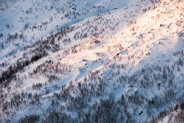 Sunlight on snow slope hill with dry forest in winter