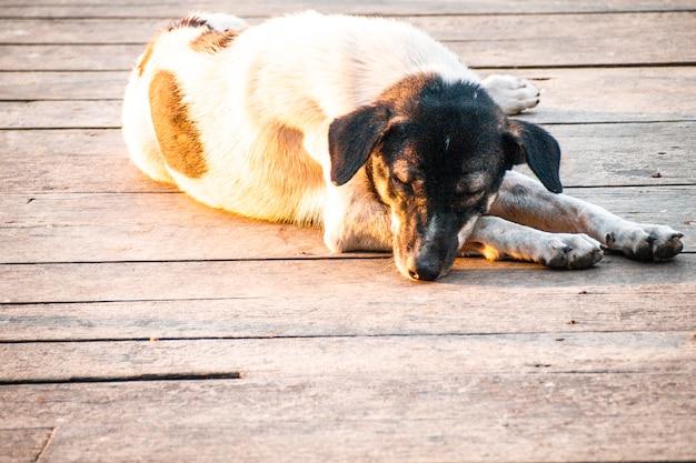 橋の上に横たわっている黒と白の野良犬または農場の犬を通して日光
