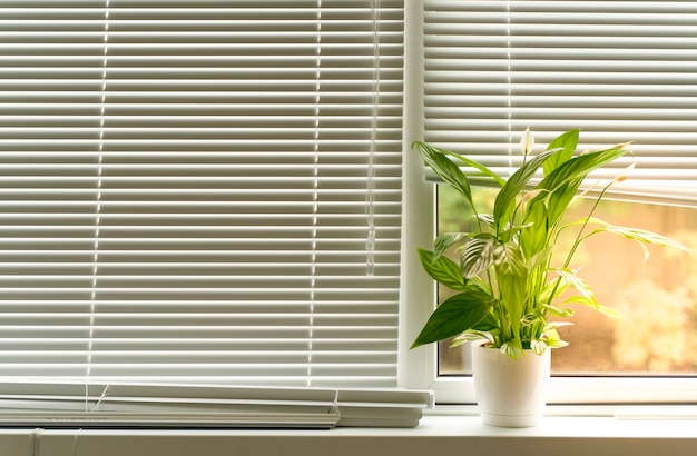 Sunlight on a window with blinds and a flower on the windowsill high quality photo