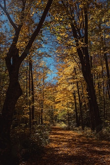 ウィスコンシン州北部の太陽に照らされた秋のトレイル