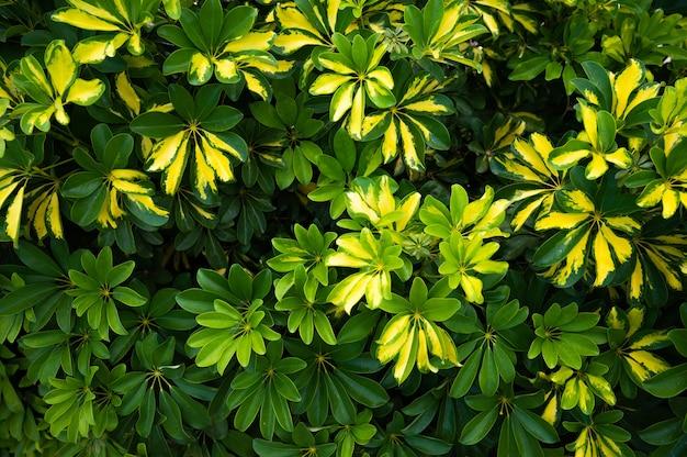 햇볕에 쬐인 녹색 잎과 노란 꽃 배경. 평면도. 공간을 복사합니다. 고품질 사진