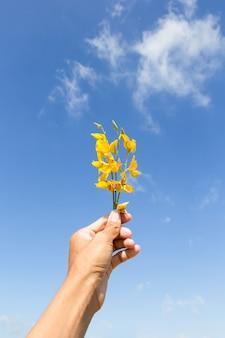 Sunn hemp flowers on hand