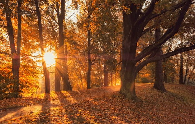 Sunny alley in the park, golden in autumn