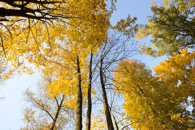 Sunny autumn landscape