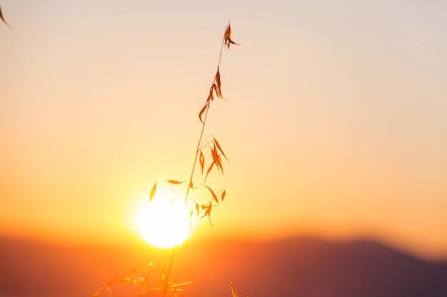 日当たりの良い秋の牧草地。自然な背景。
