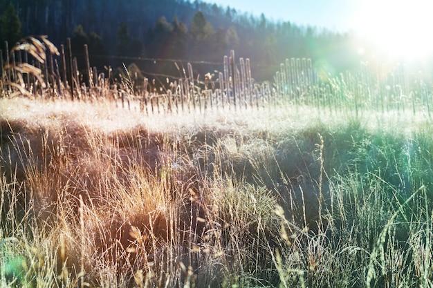 日当たりの良い秋の牧草地