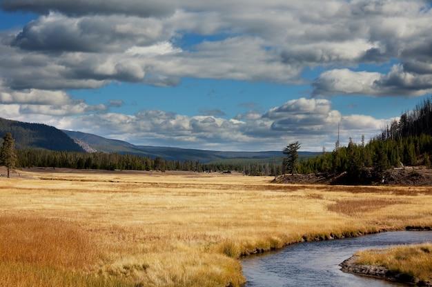 日当たりの良い秋の牧草地 Premium写真