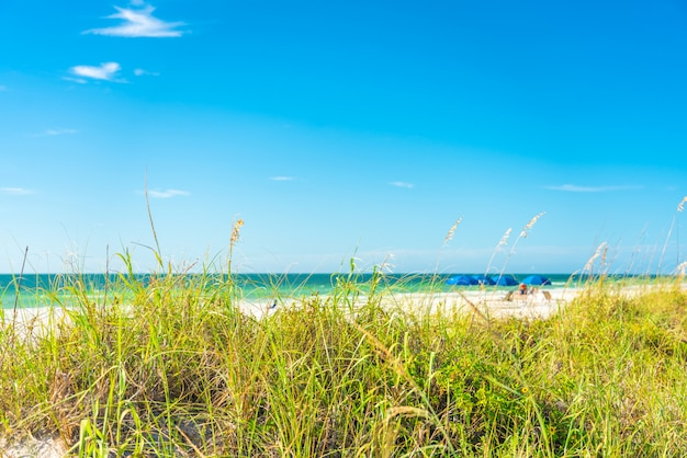 Sunny beach with grass and blue sky in florida