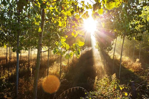 森の中の日当たりの良い梁