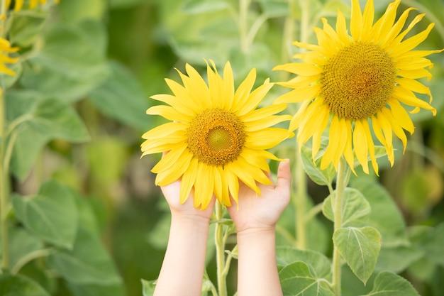 Bella foto soleggiata di girasole in mani femminili, pianta che cresce tra gli altri girasoli.