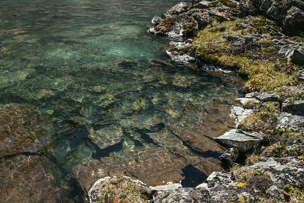Солнечный красивый пейзаж с мхами и травами на камнях у кромки воды горного озера в солнечном свете. живописный пейзаж с горной флорой у края ледникового озера. чистая вода ледникового озера.