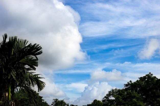 숲 위의 맑은 푸른 하늘