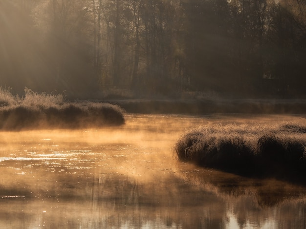 霧の沼の晴れた夜明け。沼に生えている乾いた草の夕焼け。ソフトフォーカス。