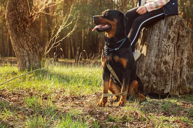 화창한 날과 침엽수 림에서 강아지와 함께 산책