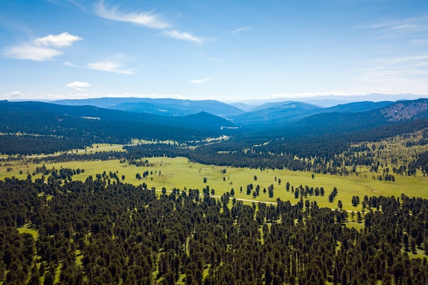 Sunny day in a coniferous forest, in the background a mountain with a mountain range, green fields and a blue sky