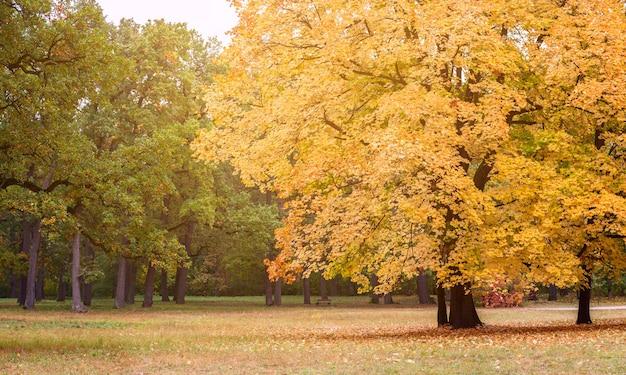 가을 공원에서 화창한 날