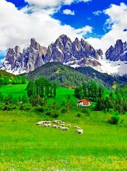 시골, Dolomites 산, 알프스, 이탈리아에서 화창한 날 프리미엄 사진