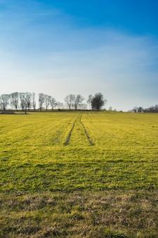 Солнечный день в поле