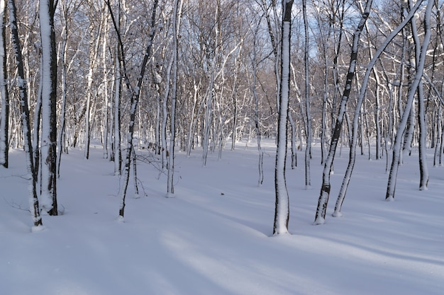 Солнечный день в зимнем парке в снегу