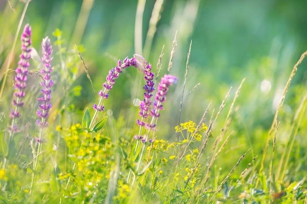 꽃 초원에 화창한 날입니다. 아름다운 자연.