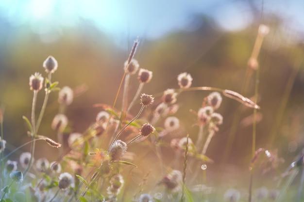 花の牧草地の晴れた日。