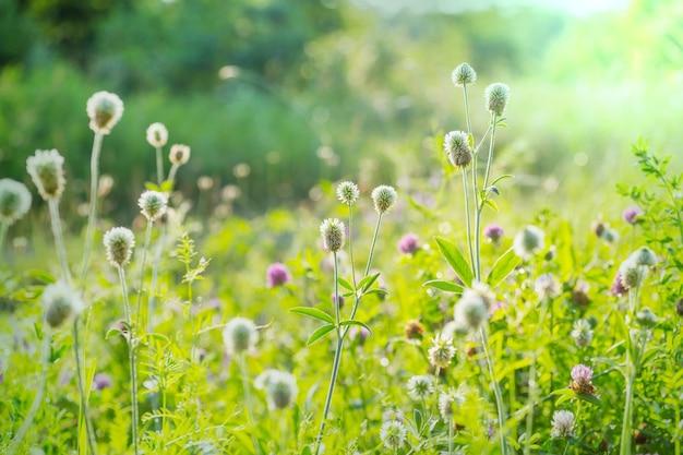 꽃 초원에 화창한 날입니다.